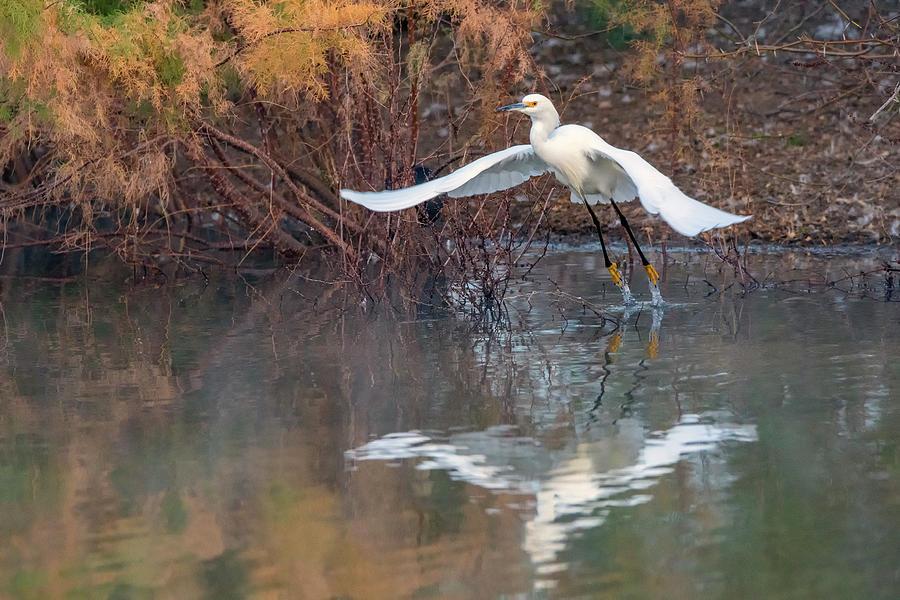 Snowy Egret 5314-012020-2 by Tam Ryan
