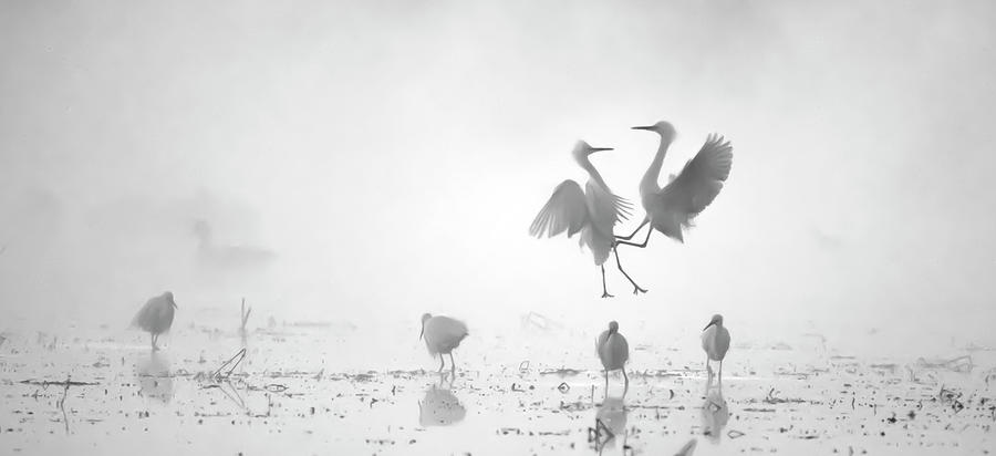 Snowy Egret Fight 2968-010720-6-bw by Tam Ryan