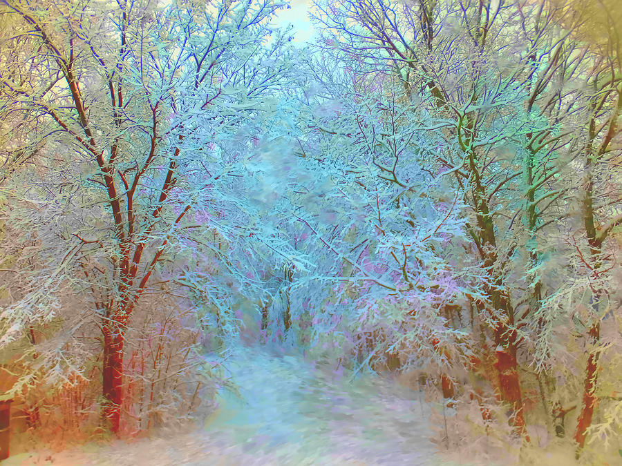 Winter Woods Photograph by Ali Bailey