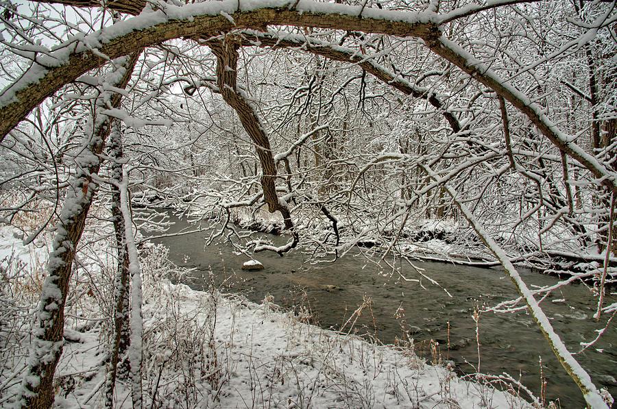 Grass Photograph - Snowy Oak Fingers 2 by Bonfire Photography