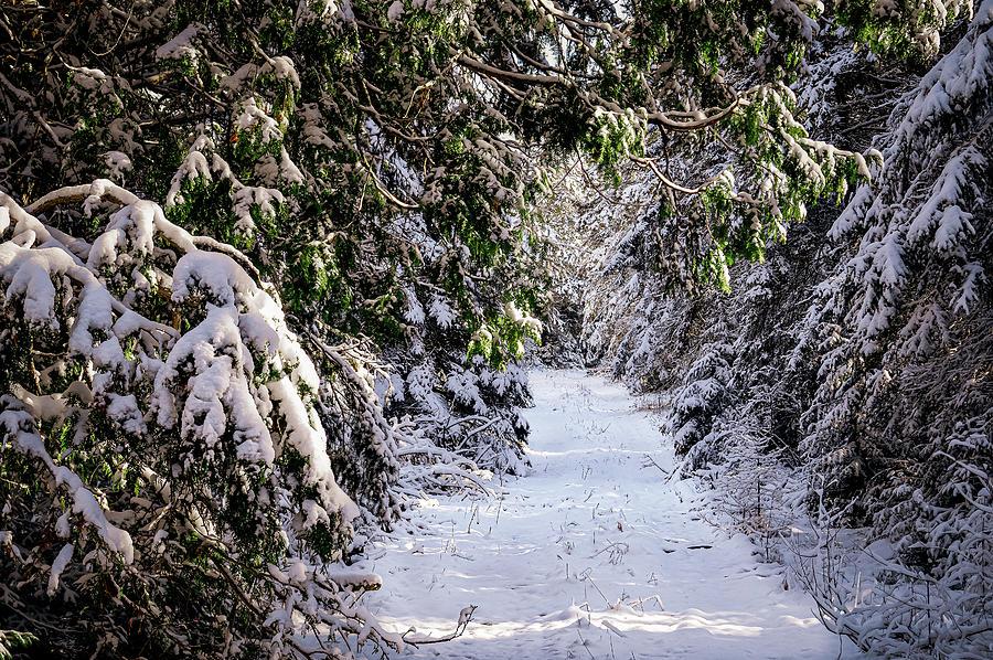Snowy Path by David Heilman