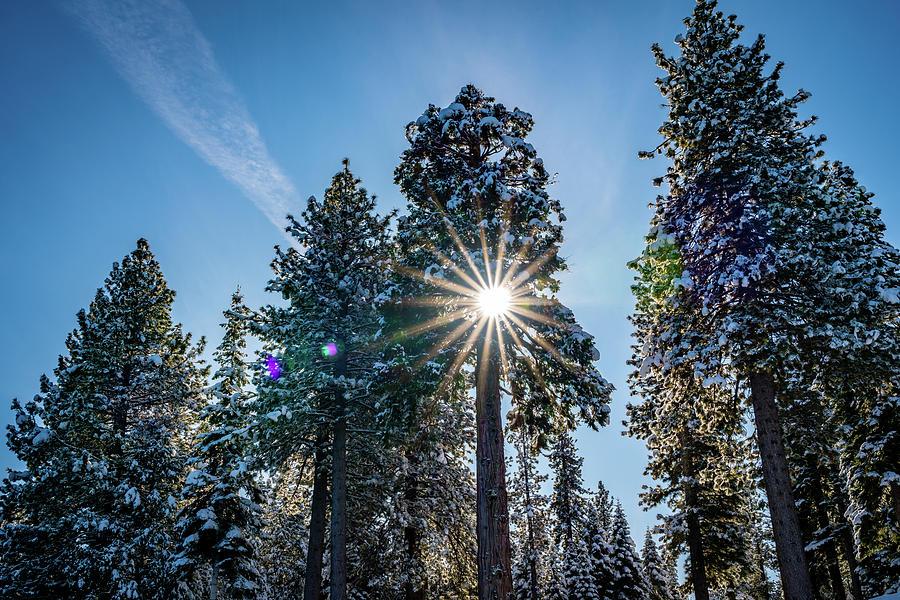 Snowy Sunburst Photograph