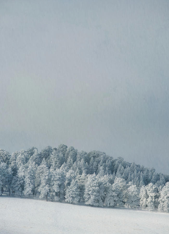 Snowy Trees by Kevin Schwalbe