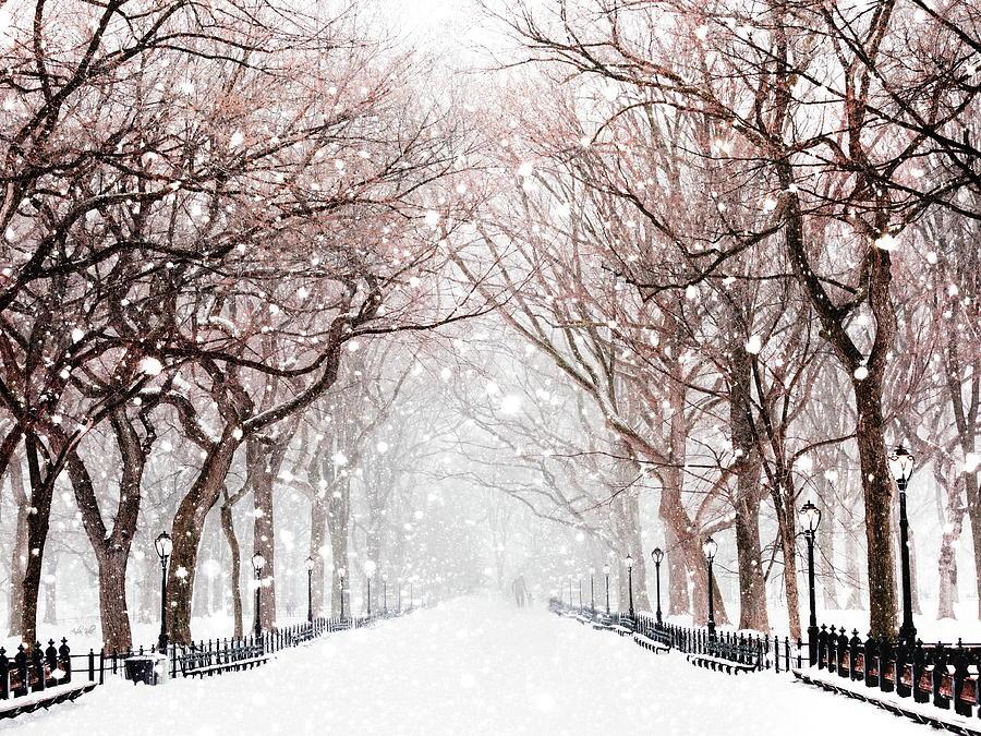 Snow Photograph - Snowy Walk  by Andrea Kollo