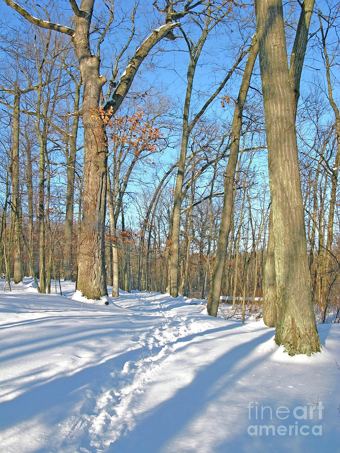 Snowy Woods Walk by Ann Horn
