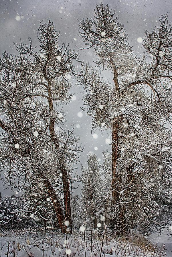 Silence Photograph - Snowy_Silence_202103_22 by Joseph Liberti
