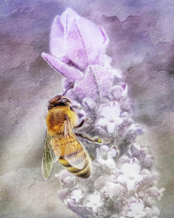 So Bee It Photograph