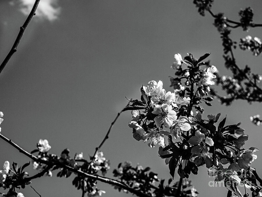 Spring Photograph - So spring came by Rostislav Bouda