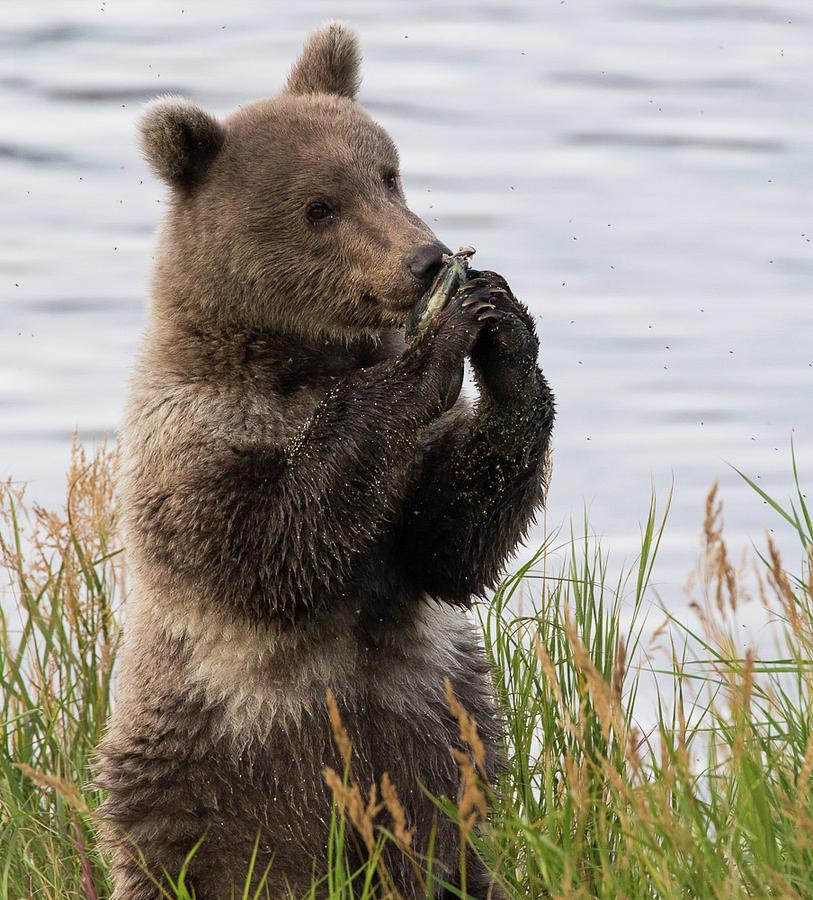 Alaska Photograph - So tasty by Craig Brown