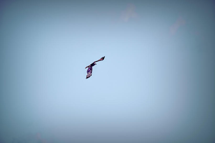 Soaring In The Blue 1 #l1 Photograph