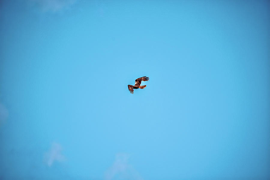 Soaring In The Blue #l1 Photograph