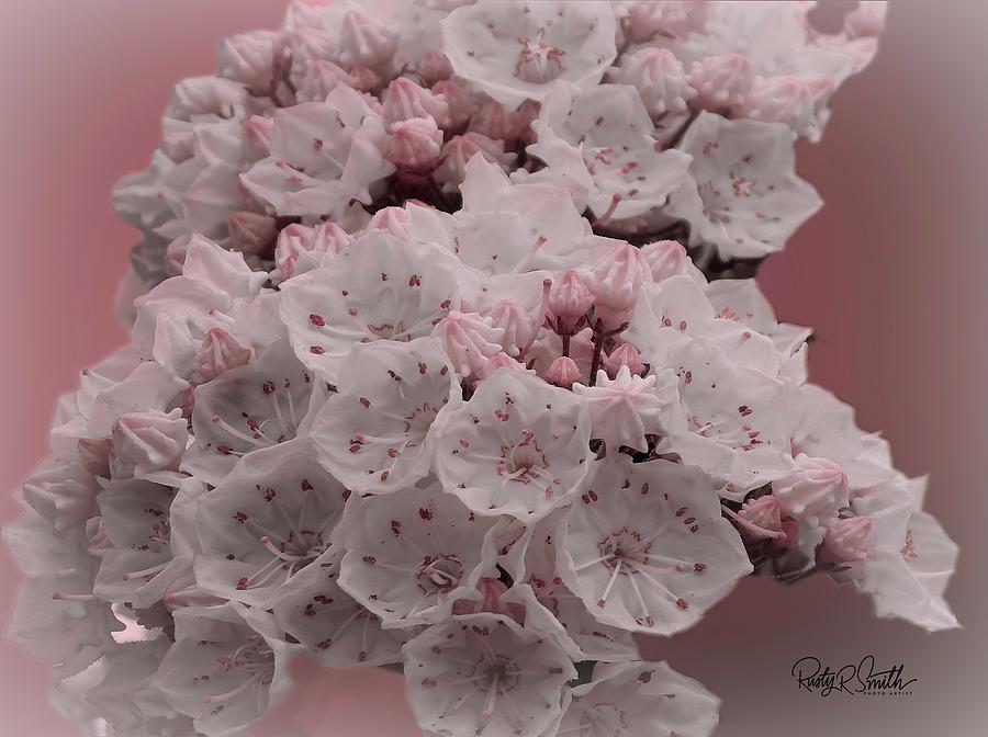Soft art photograph of mountain laurel. by Rusty R Smith