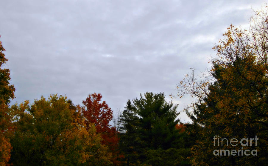 Landscape Photograph - Soft Autumn Colors Cloudy Sky by Frank J Casella