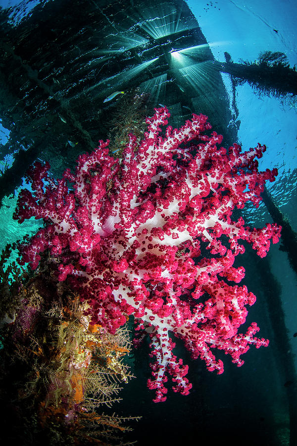 Soft Coral Under Jetty Photograph