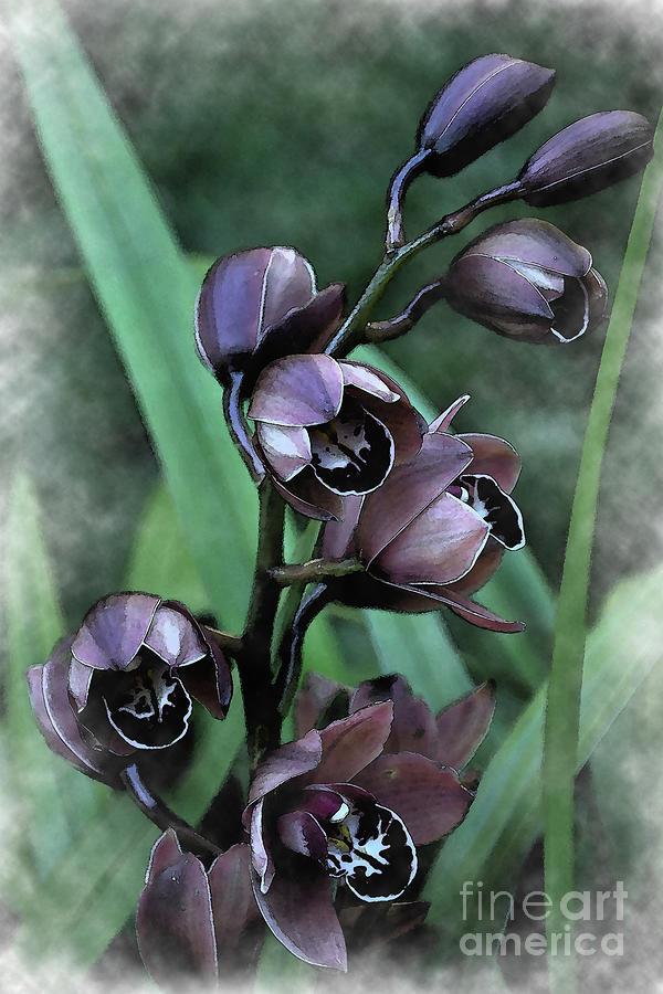 Botanical Digital Art - Soft Orchid Blooms by Kirt Tisdale