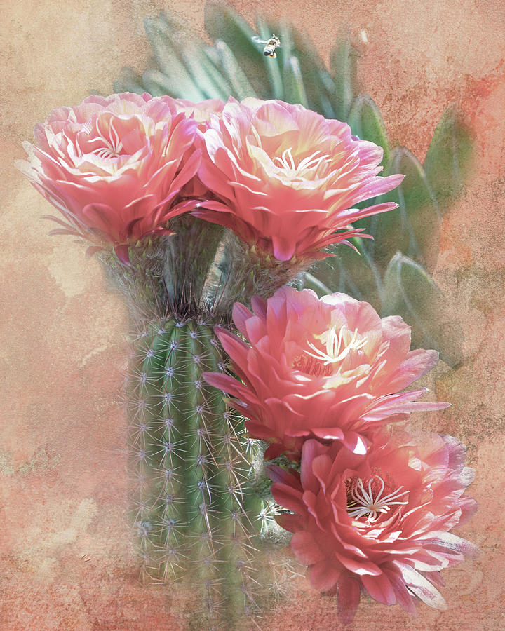 Soft Red Blooms of Tucson by Steve Kelley