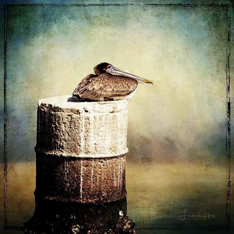 Pelican Digital Art - Solitary by Linda Lee Hall