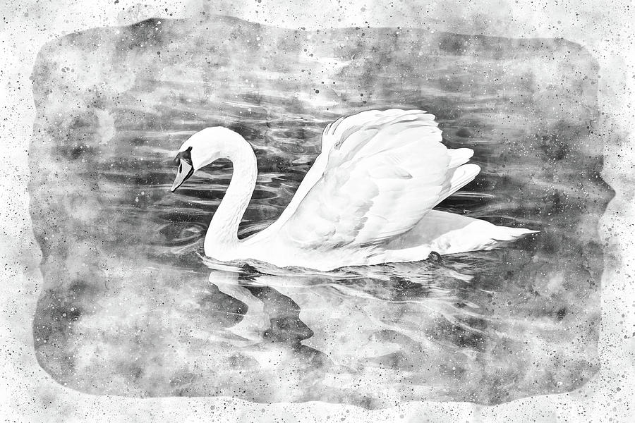 Solo Swan Watercolor Black And White Photograph