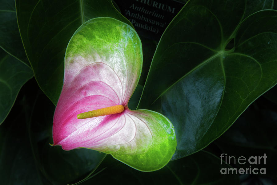 Conservatory Photograph - Song For A Flower by Marilyn Cornwell