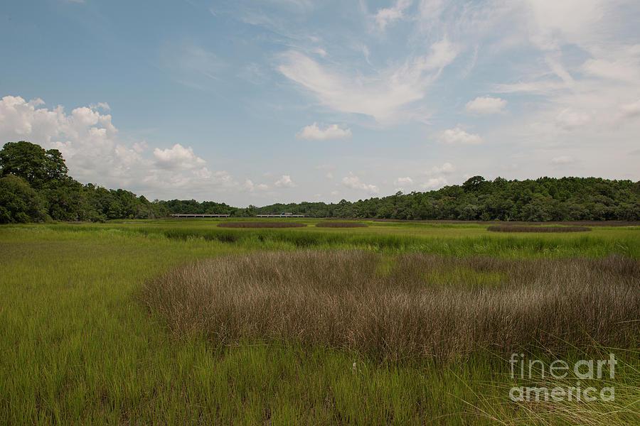 South Carolina Dry Marsh - Daniel Island Sc Photograph