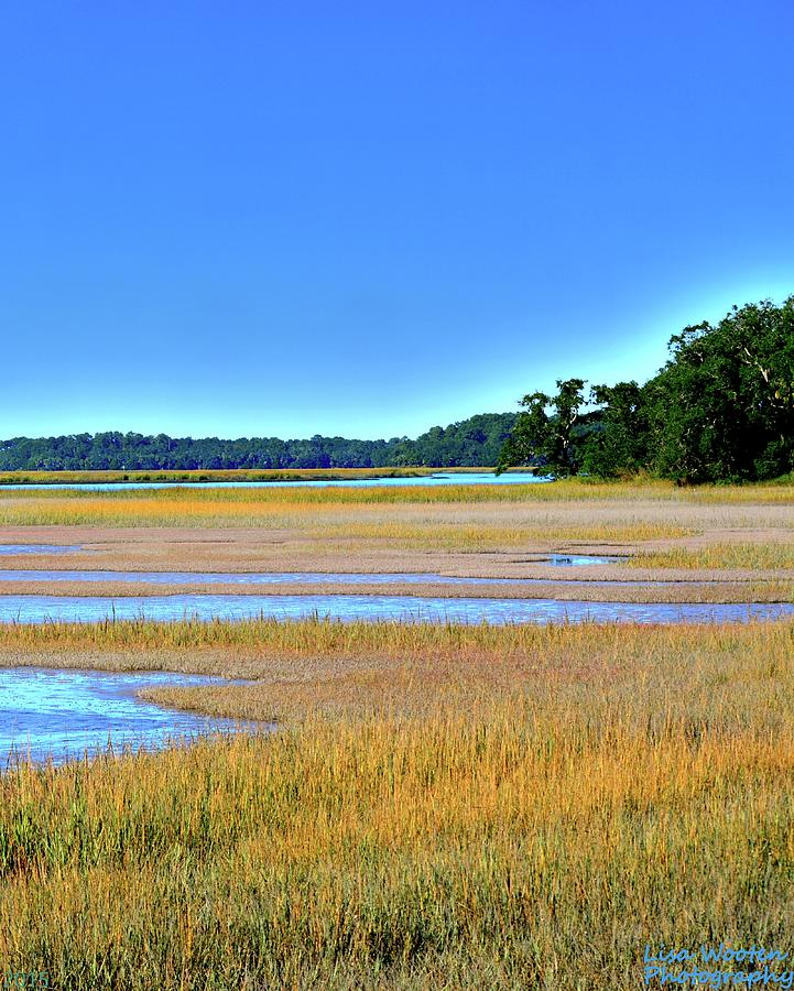 South Carolina Lowcountry Hdr Vertical 2 by Lisa Wooten