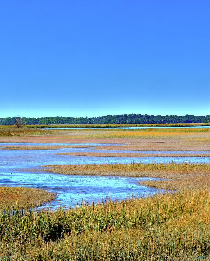 South Carolina Lowcountry Hdr Vertical 3 by Lisa Wooten
