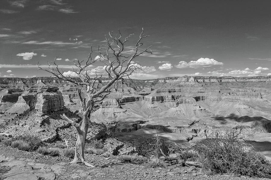 South Kaibab Trail 63 in black and white by Marisa Geraghty Photography