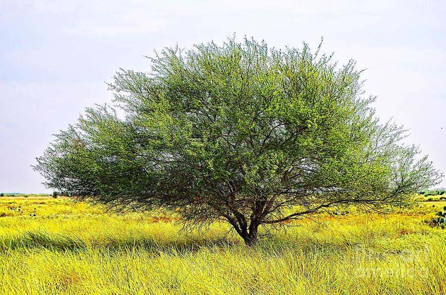 South Texas Photograph