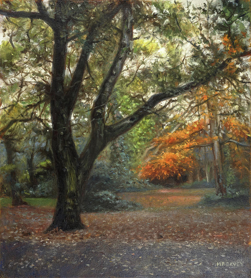 Southampton Common tree by path in Autumn by Martin Davey