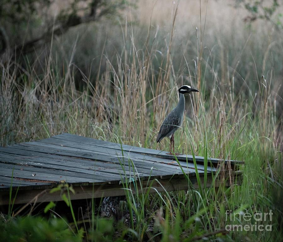 Southern Cordgrass Tales Photograph