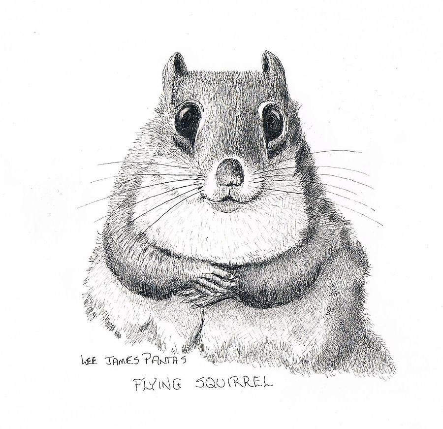 Squirrel Drawing - Southern Flying Squirrel by Lee Pantas