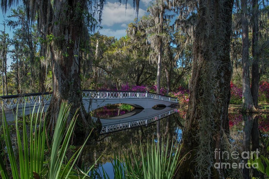 Southern Journey - Magnolia Plantation Photograph