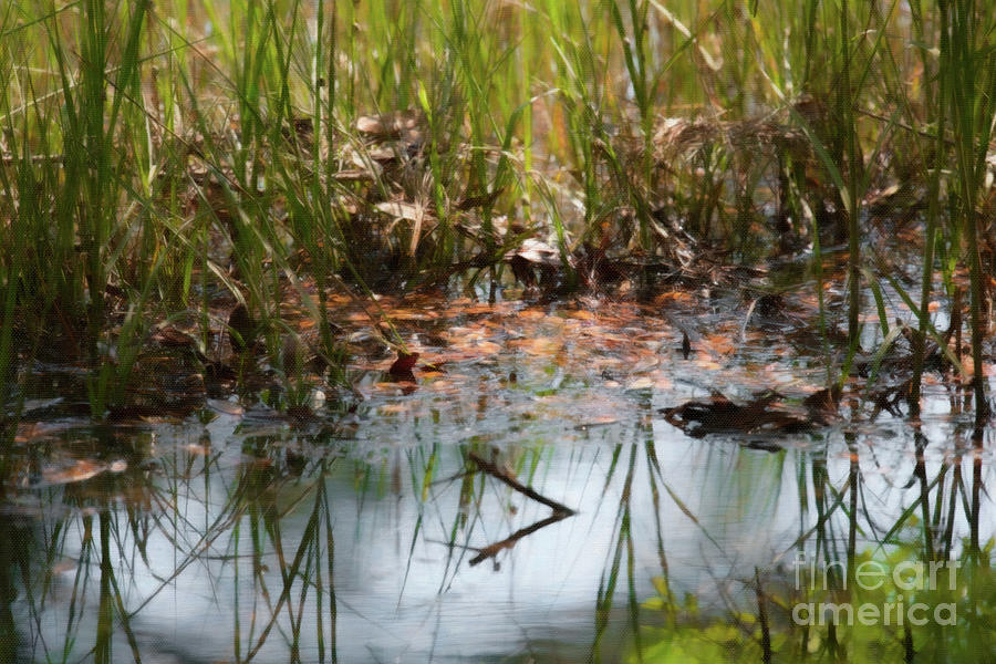 Southern Marsh Life Painting