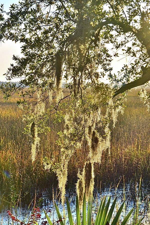 Spanish Moss Vertical by Lisa Wooten
