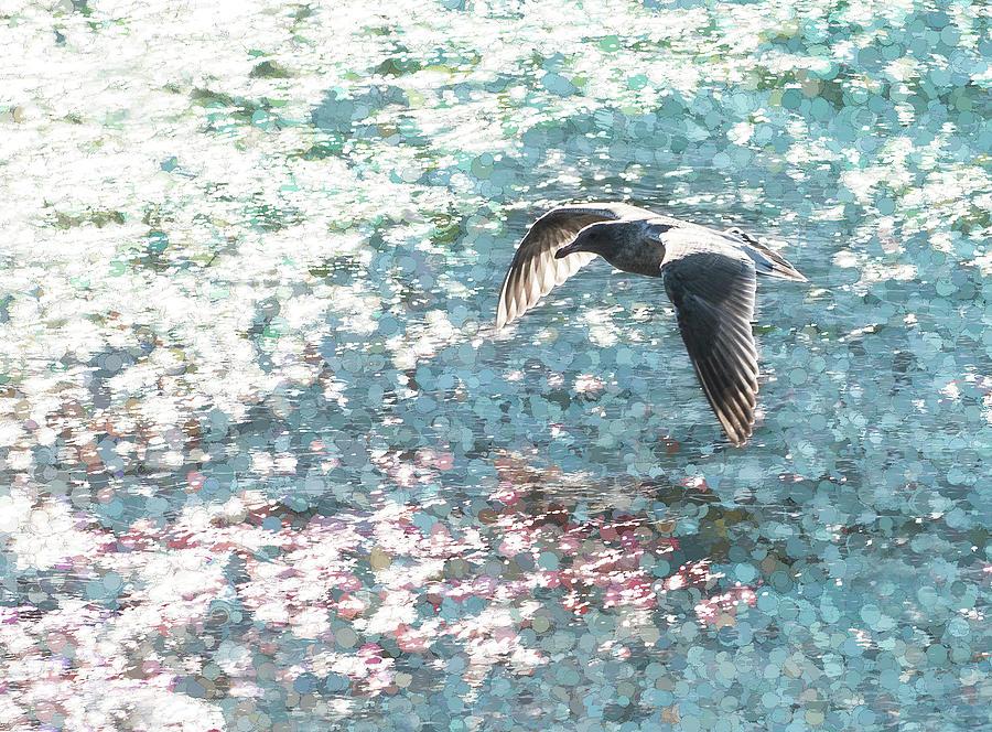 Sparkling Gull Photograph
