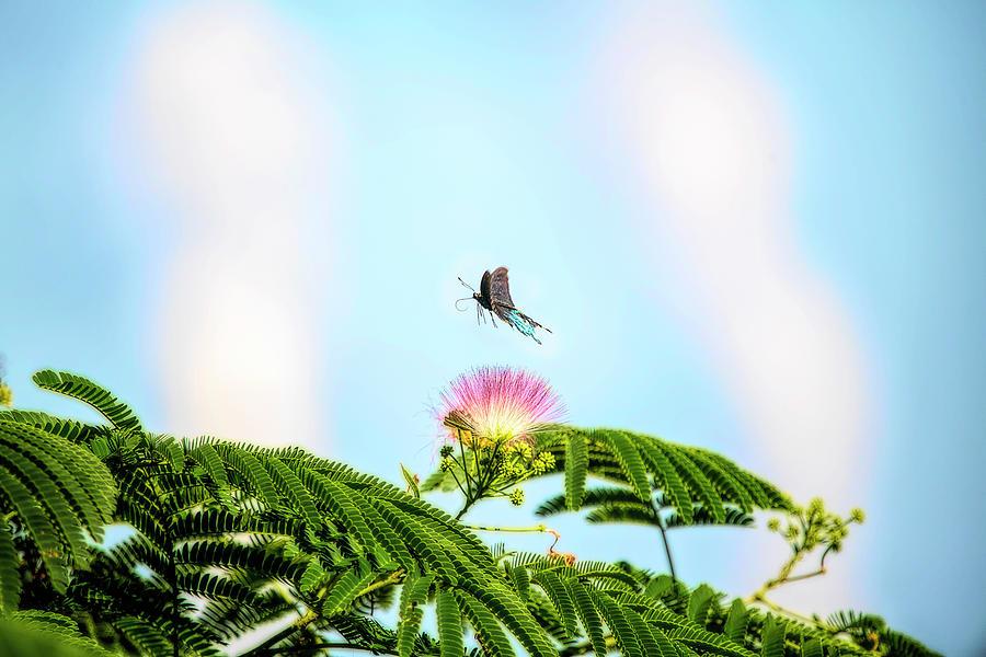 Spicebush Swallowtail flying off after feeding by Dan Friend