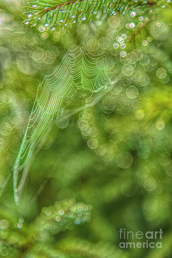 Spider Web 7 Photograph