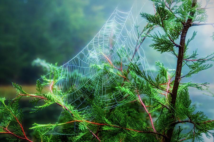 Spider Web Flare by Kristia Adams