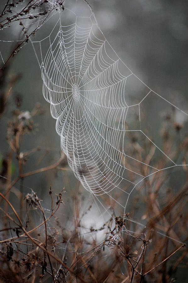 Spider Web Sail with Morning Dew by RD Erickson