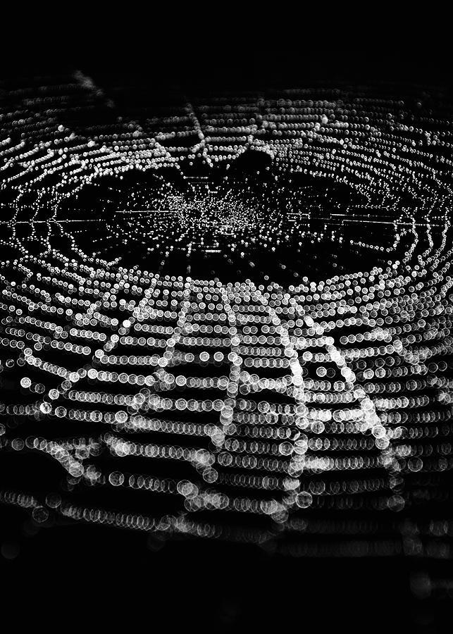 Spiderweb No 1 Photograph