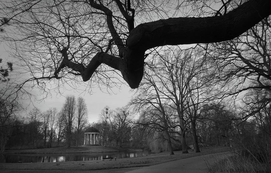 Spindly Tree In The Park Photograph