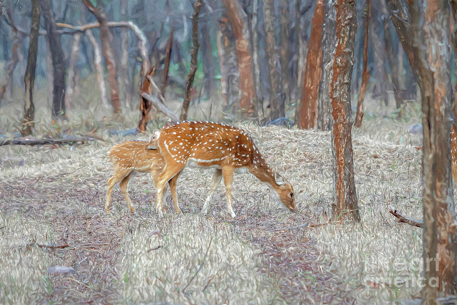 Spotted Deer In The Forest Digital Art