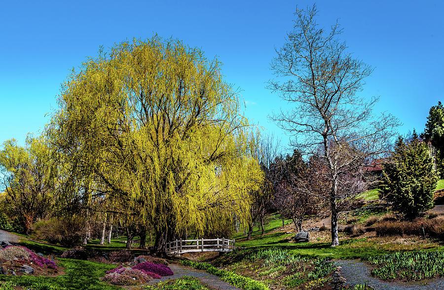 Spring At The Arboretum Photograph