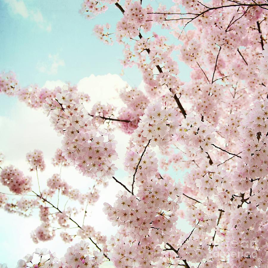 Spring Beauty Photograph