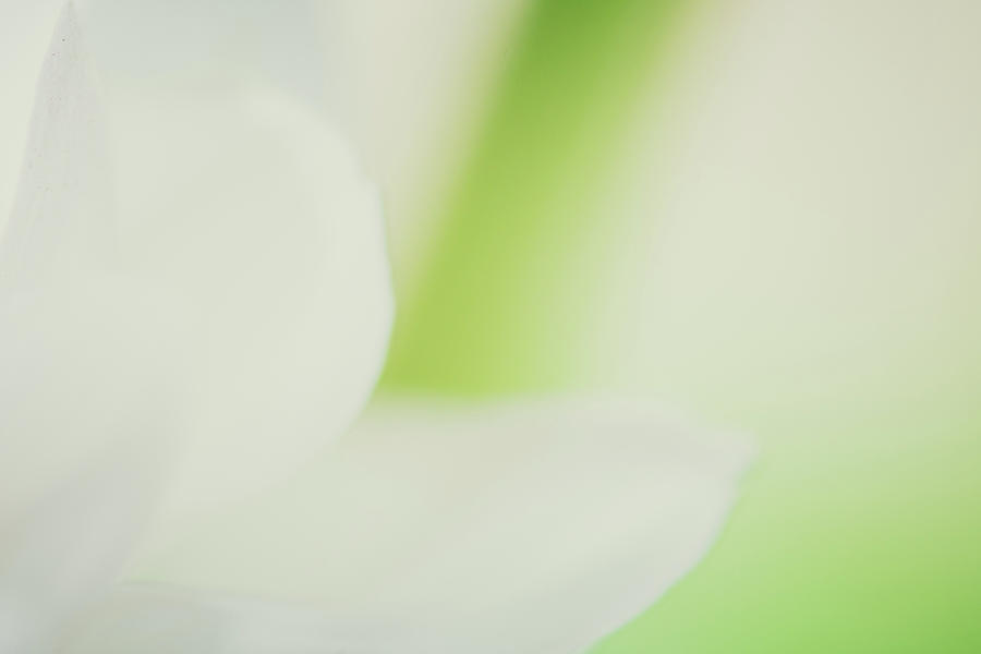 Spring Bokeh Light Background, Glowing Backdrop. Defocused Background Photograph
