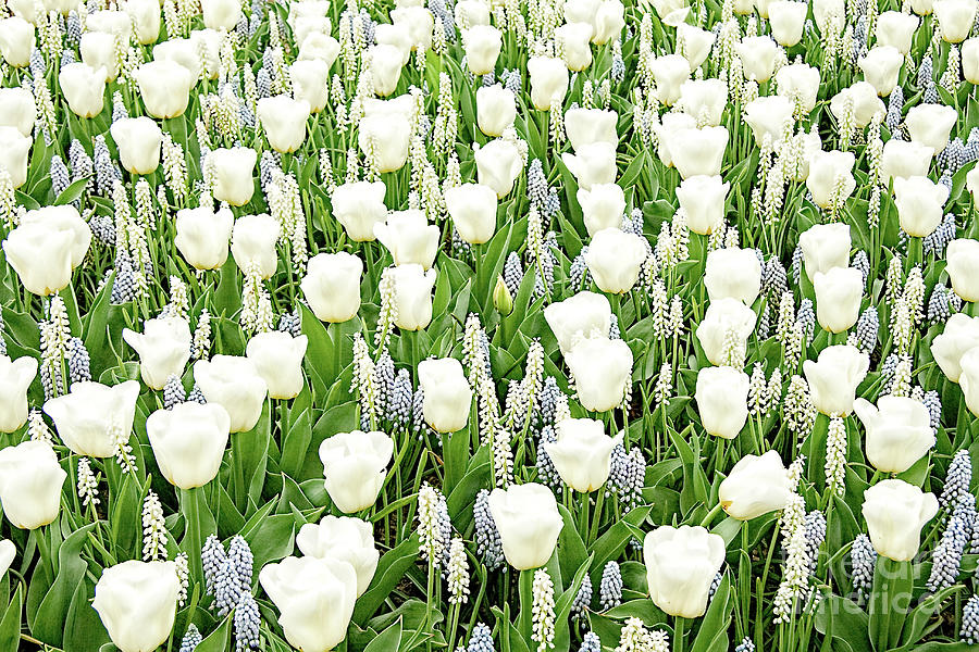 Gardens Photograph - Spring Dream by Marilyn Cornwell
