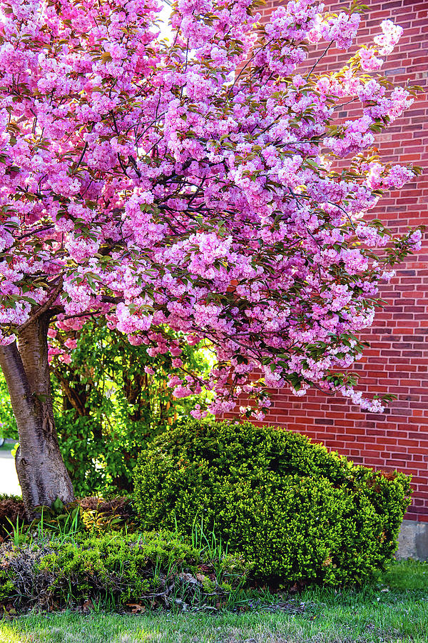 Spring Explosion Photograph