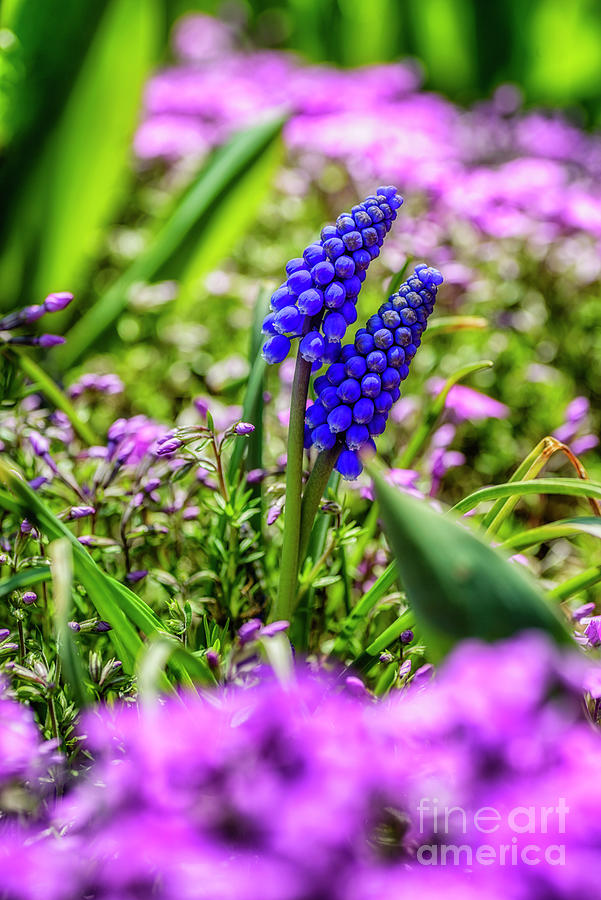 Spring Flowers In Bloom Photograph