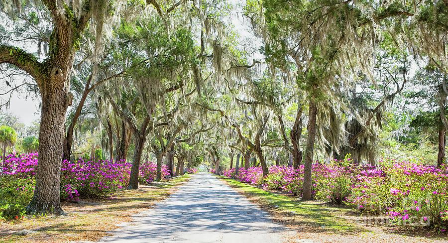 Spring In Bonaventure Cemetery, Savannah, Georgia by Felix Lai