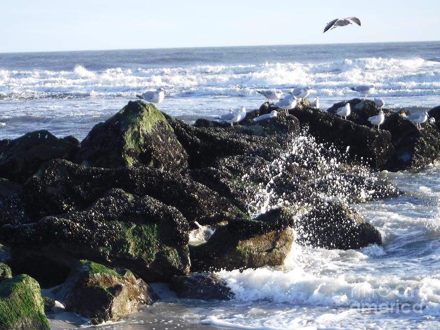 SPRING IN JANUARY AT LONG BEACH by BARBRA TELFER